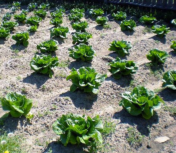 easy simple living ideas vegetable garden